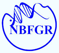 NBFGR Notification 2019 – Openings For Various SRF, YP, Assistant Posts