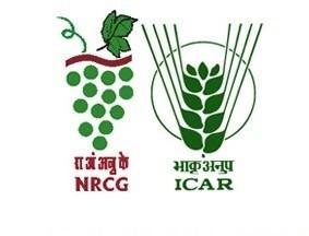 ICAR-NRCG Notification 2019 – Opening for Various SRF Posts