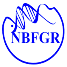NBFGR Notification 2020